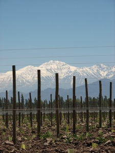 A Mendoza Vineyard with the Andes as a backdrop