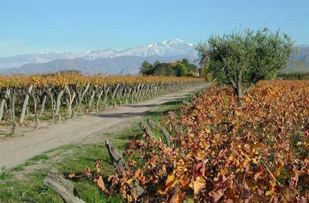 Mendoza Vineyards Wine Tour, courtesy of World66