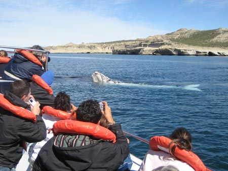 Whale watching off the Valdes Peninsula