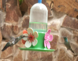 Hummingbirds in garden in Iguazu
