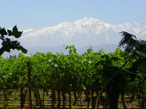 Mendoza wine country with Andes in the background