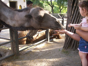 Feeding the Animals at the Buenos Aires Zoo