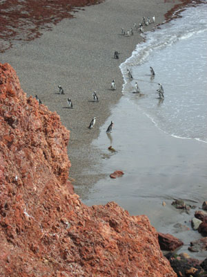 The Punta Tombo Penguin Colony