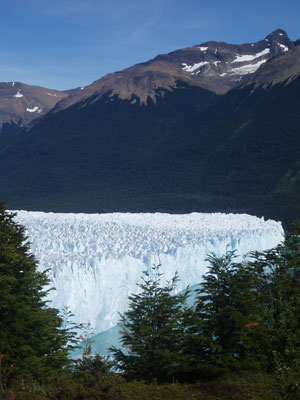 Perito Moreno Glacier through the trees.